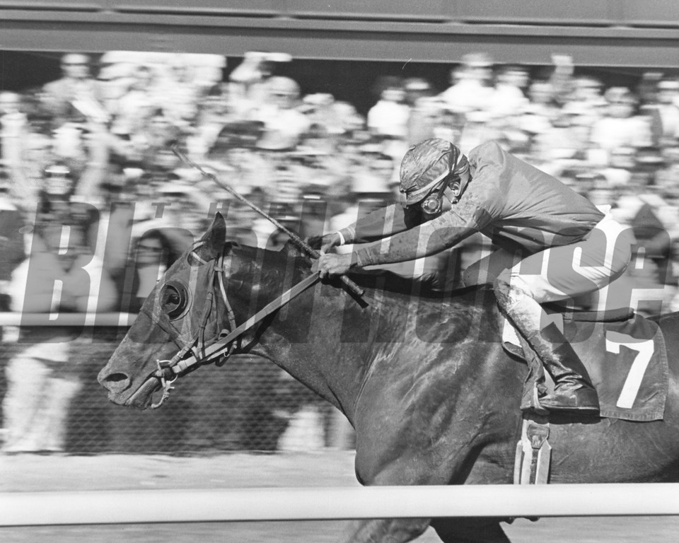 Alydar won the Bluegrass Stakes in 1978 with Jorge Velasquez up. <br /> Photo by: Milt Toby