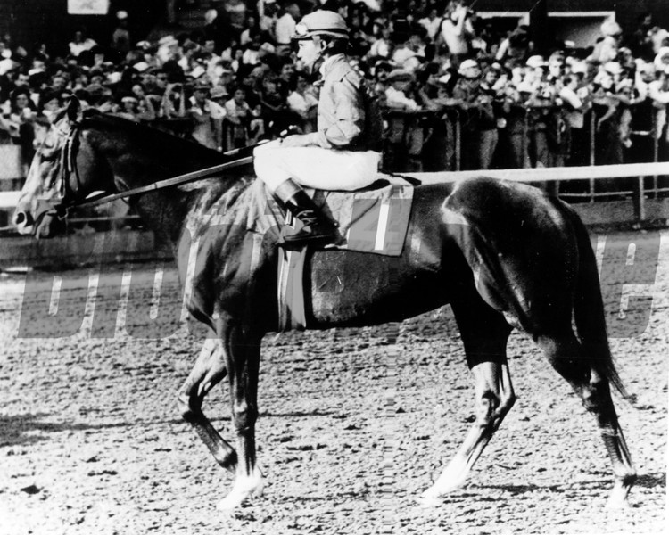 Alydar heads to post at the Travers to face Affirmed in 1978. (was declared winner upon disqualification of Affirmed). <br /> Photo by: Bob Coglianese