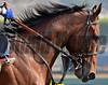American Pharoah Profile 11x14 032115