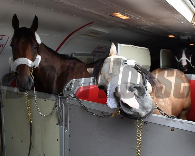 American Pharoah and Smokey arrive at Belmont Park.<br /> Photo by: Adam Coglianese/NYRA