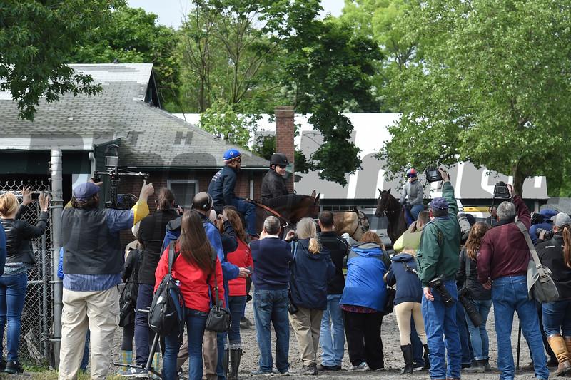 American Pharoah at Belmont Park June 3, 2015.<br /> Coglianese Photos/Susie Raisher