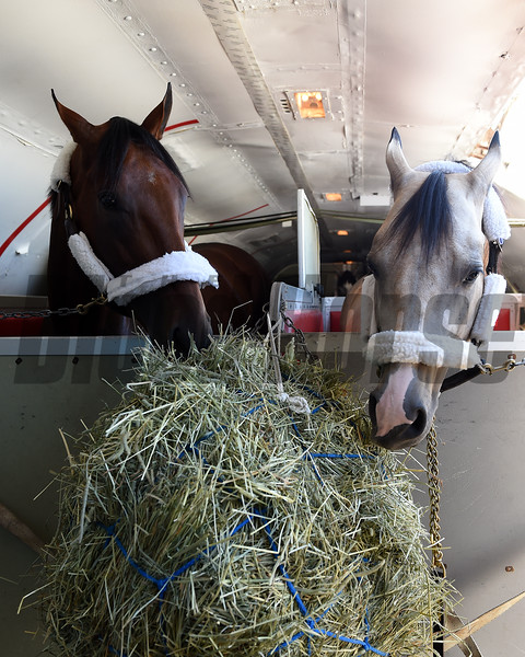 American Pharoah and Smokey the pony share a snack and are set to return to Churchill Downs following their Belmont Park adventures.<br /> Coglianese Photos/Susie Raisher