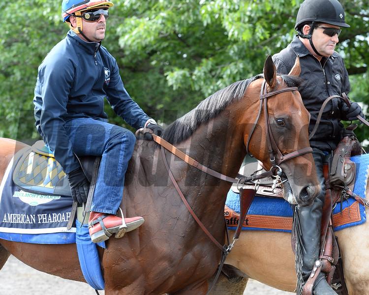 American Pharoah at Belmont Park June 3, 2015.<br /> Coglianese Photos/Chelsea Durand