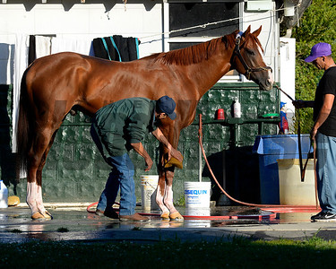 Caption: California Chrome gets bath with Raul Rodriguex and Willie Delgado holding horse Belmont and undercard works on June 1, 2014, at Belmont Park in Elmont, N.Y. SunOrigs1   image395 Photo by Anne M. Eberhardt