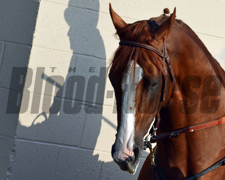 California Chrome Shadow