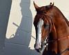 California Chrome Shadow