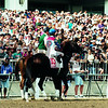 Cigar walks in front of the fans at the 1996 Citation Challenge at Arlington. <br /> Photo by Anne M. Eberhardt.