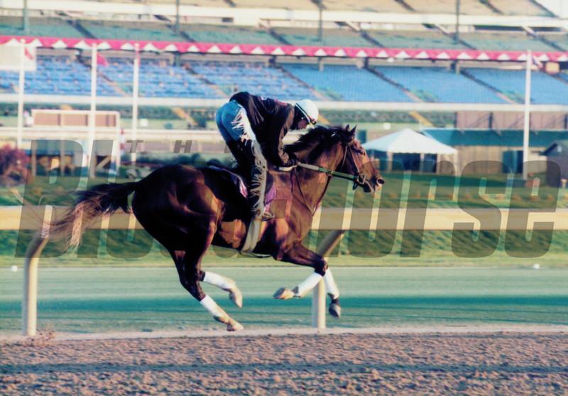 Batch 40, horses beginning with C