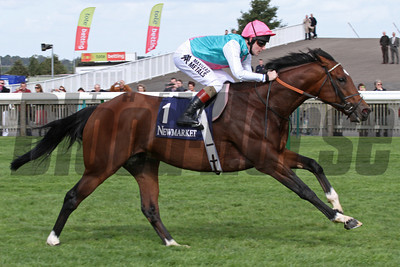 Frankel leads a racecourse gallop at The Rowley Mile at Newmarket September 29, 2012.