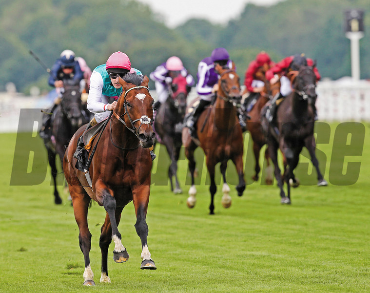 Frankel kicked off 2012 Royal Ascot with an 11-length romp in the one mile Queen Anne Stakes under Tom Queally.<br /> Photo by: Trevor Jones