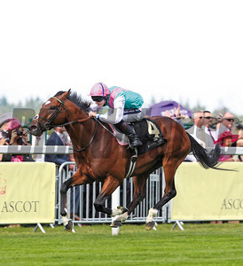 ROYAL ASCOT TUES 14 JUNE 2011 PIC: CAROLINE NORRIS FRANKEL RIDDEN BY TOM  QUEALLY WINNING THE ST JAMES'S PALACE STAKES