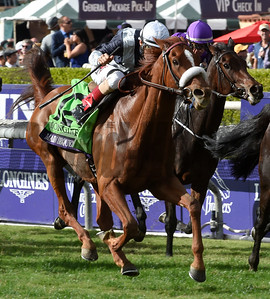 #12 Main Sequence with jockey John Velazquez wins the Breeders Cup Turf Nov. 1, 2014 at Santa Anita Race Track in Arcadia California.  Photo by Skip Dickstein