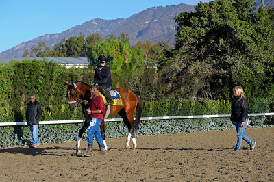 Caption:  Mucho Macho Man with trainer Kathy Ritvo after practising at the gate. Husband Tim Ritvo at left.  Breeders' Cup horses and connections at Santa Anita near Acadia, California, preparing for Breeders' Cup raceways on Nov. 1 and Nov. 2, 2013. BCWorks1Jpegs_10_29_13 image539 Photo by Anne M. Eberhardt