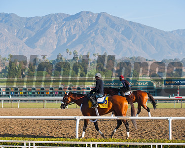 Caption:  Mucho Macho Man and the San Gabriel Mountains at Santa Anita Breeders' Cup horses and connections at Santa Anita near Acadia, California, preparing for Breeders' Cup raceways on Nov. 1 and Nov. 2, 2013. BCWorks01_10_26_13 RAWimage763 Photo by Anne M. Eberhardt