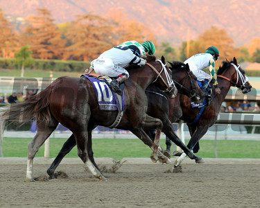 The Breeders' Cup Classic is won by Mucho Macho Man. Photo by Dave Harmon