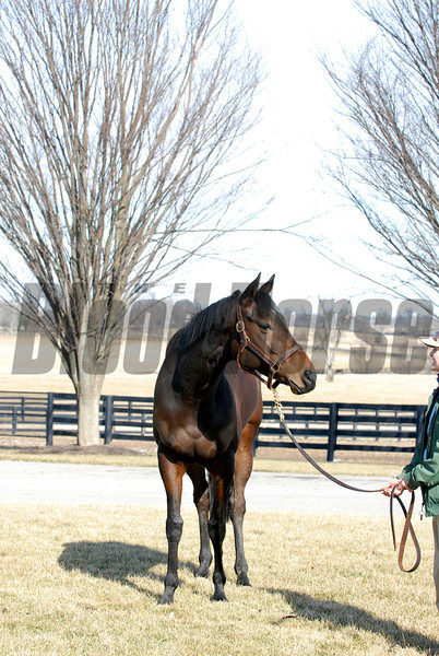 CAPTION:<br /> Ouija Board during her stay at Lane's End Farm in Versailles, Ky. on February 15, 2007, where she will be bred to Kingmambo.<br /> OuijaBoard image56<br /> Photo by Anne M. Eberhardt