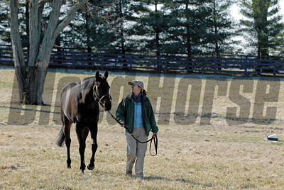 CAPTION: Ouija Board during her stay at Lane's End Farm in Versailles, Ky. on February 15, 2007, where she will be bred to Kingmambo. OuijaBoard image21 Photo by Anne M. Eberhardt