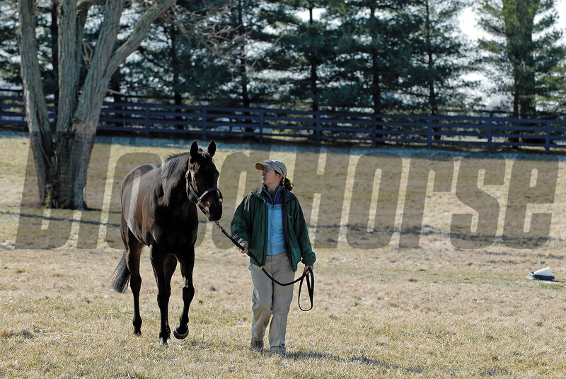 CAPTION:<br /> Ouija Board during her stay at Lane's End Farm in Versailles, Ky. on February 15, 2007, where she will be bred to Kingmambo.<br /> OuijaBoard image21<br /> Photo by Anne M. Eberhardt