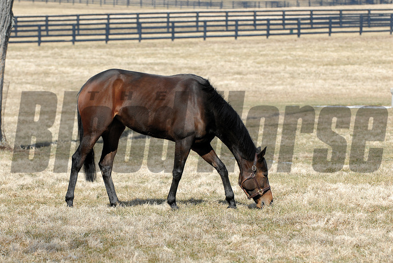 CAPTION:<br /> Ouija Board during her stay at Lane's End Farm in Versailles, Ky. on February 15, 2007, where she will be bred to Kingmambo.<br /> OuijaBoard image59<br /> Photo by Anne M. Eberhardt