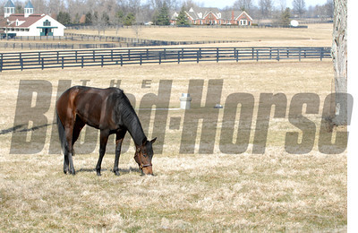 CAPTION: in her paddock/LE office and barn behind Ouija Board during her stay at Lane's End Farm in Versailles, Ky. on February 15, 2007, where she will be bred to Kingmambo. OuijaBoard image68 Photo by Anne M. Eberhardt