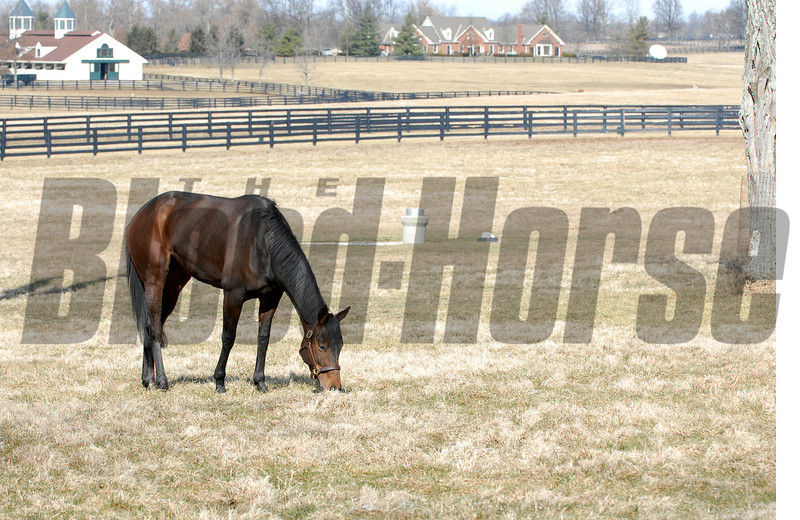 CAPTION: in her paddock/LE office and barn behind<br /> Ouija Board during her stay at Lane's End Farm in Versailles, Ky. on February 15, 2007, where she will be bred to Kingmambo.<br /> OuijaBoard image68<br /> Photo by Anne M. Eberhardt