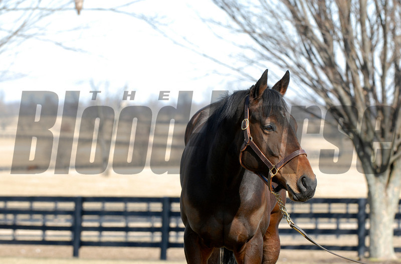 CAPTION:<br /> Ouija Board during her stay at Lane's End Farm in Versailles, Ky. on February 15, 2007, where she will be bred to Kingmambo.<br /> OuijaBoard image90<br /> Photo by Anne M. Eberhardt