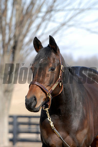 CAPTION: Ouija Board during her stay at Lane's End Farm in Versailles, Ky. on February 15, 2007, where she will be bred to Kingmambo. OuijaBoard image74 Photo by Anne M. Eberhardt