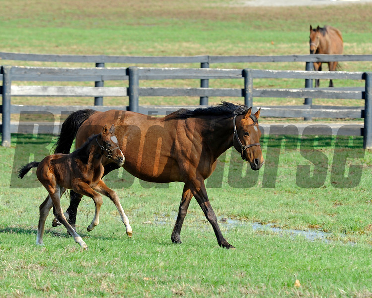 Caption: <br /> Lotta Kim produced a full sister to Rachel Alexandra on Feb. 27, 2011, at Dr. Dede McGehee's Heaven Trees Farm near Lexington, Ky. Photographed on March 12, 2011, the Medaglia d'Oro filly is owned by Dolph Morrison. for Throughthelensblog.com, Blood-Horse and bloodhorse.com<br /> LottaKim Origs1 image 856<br /> Photo by Anne M. Eberhardt