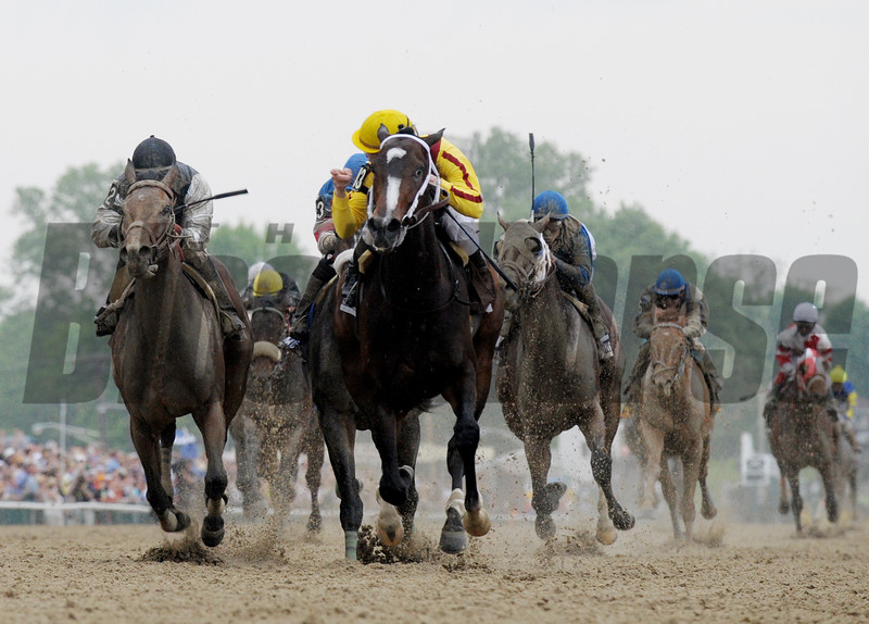 Filly Rachel Alexandra with Kentucky Derby winning jockey Calvin Borel makes a clear path to history by winning the 134th running of the Preakness Stakes and being the first filly to win the race since 1924 at the Pimlico Race track in Baltimore, Maryland May 16, 2009.