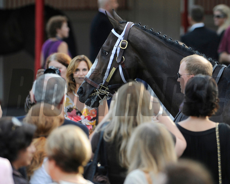 Rachel Alexandra walks in to the paddock before winning the 56th running of the Woodword at the Saratoga Race Course in Saratoga Springs, New York September 5, 2009.   (Skip Dickstein)