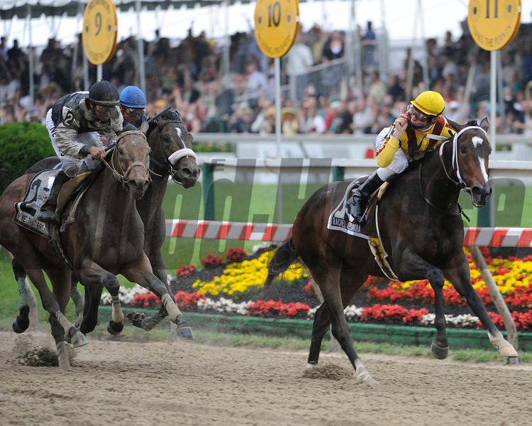 Filly Rachel Alexandra with Kentucky Derby winning jockey Calvin Borel makes a clear path to history by winning the 134th running of the Preakness Stakes and being the first filly to win the race since 1924 at the Pimlico Race track in Baltimore, Maryland May 16, 2009.  (Skip Dickstein / Times Union)