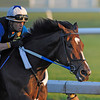 Reigning Horse of the Year Rachel Alexandra had her first speed work of the summer at the Oklahoma Training track in Saratoga Springs, New York July 5, 2020.   (Skip Dickstein