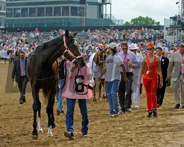 Caption:  Rachel Alexandra wears a pink halter on her way to the Kentucky Oaks (gr. I) at Churchill Downs near Louisville, Ky. on May 1, 2009.<br /> 11-Oaks-1  image501<br /> photo by Anne M. Eberhardt
