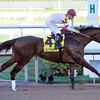 Royal Delta wins the Sabin Stakes.<br /> Photo by Coglianese Photos/Leslie Martin