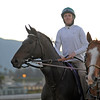 Caption: Royal Delta<br /> Breeders' Cup morning works at Santa Anita near Arcadia, California, on Oct. 30, 2012.<br /> BCRACES2012 WorksTues3 image735<br /> Photo by Anne M. Eberhardt