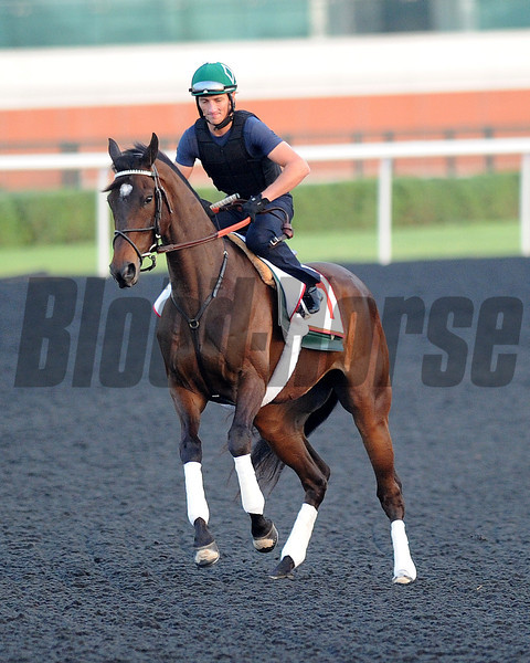 Royal Delta, March 27th, 2013, photo by Mathea Kelley, Dubai World Cup 2013,