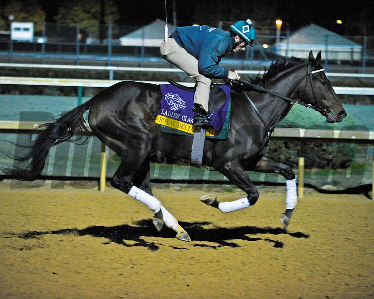 Caption: Royal Delta<br /> Works and schooling with Breeders' Cup horses at Churchill Downs in Louisville, Ky. on Oct. 29, 2011<br /> BCWorks1 image817<br /> <br /> Photo by Anne M. Eberhardt