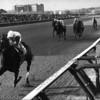 Ruffian wins the 1975 Acorn Stakes at Aqueduct.<br /> Photo by: Bob Coglianese