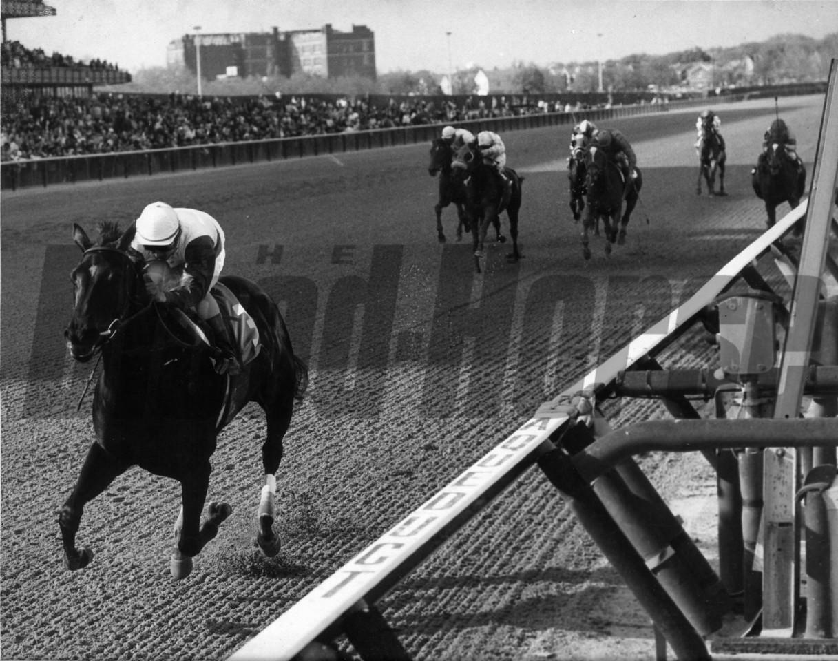 Ruffian wins the 1975 Acorn Stakes at Aqueduct. Photo by: Bob Coglianese