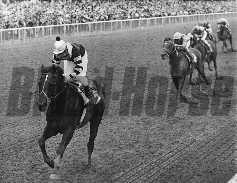 Seattle Slew wins the Belmont Stakes at Belmont Park.<br /> Photo by: Bob Coglianese