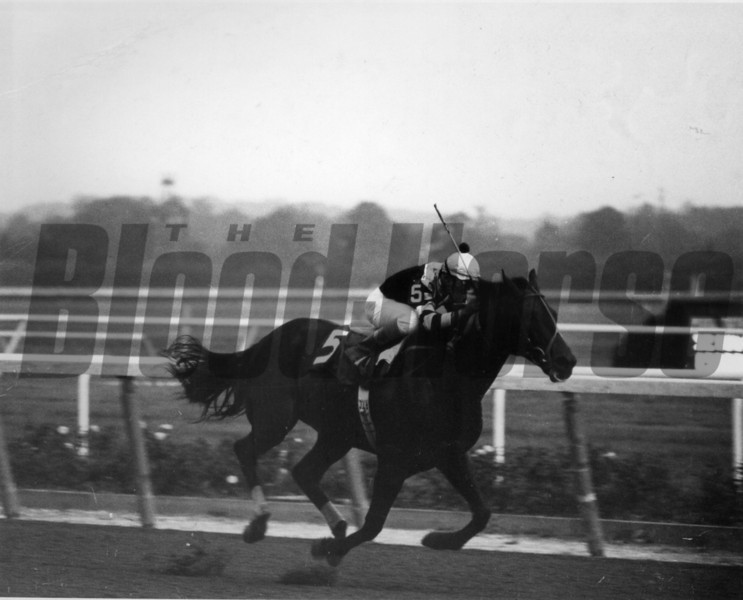 Seattle Slew and jockey Angel Cordero Jr.; winning the 1978 Marlboro Cup.<br /> Photo by: Bob Coglianese