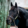 Seattle Slew<br /> Photo by: Anne M. Eberhardt