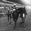Seattle Slew wins the 1978 Marlboro Cup<br /> Photo by: Bob Coglianese