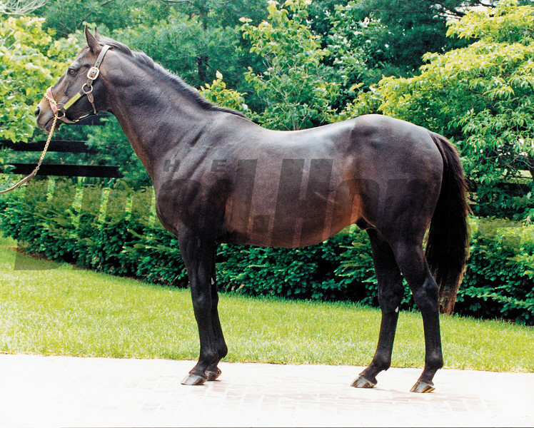 Seattle Slew Conformation 1990<br /> Photo by: Anne M. Eberhardt