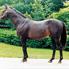 Seattle Slew Conformation May 8, 2002<br /> Photo by: Anne M. Eberhardt