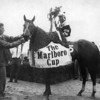 Seattle Slew after winning the 1978 Marlboro Cup.