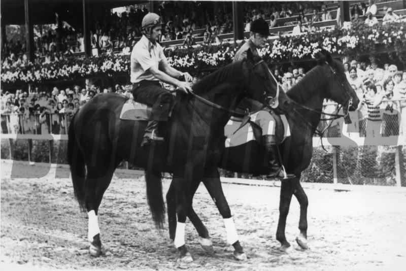 Seattle Slew at Saratoga Springs on Seattle Slew Day<br /> Photo by: Bob Coglianese