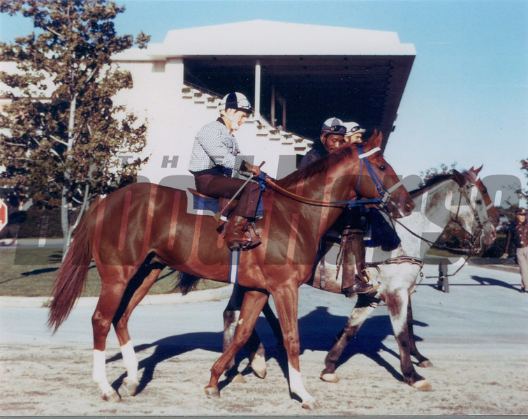 Secretariat at Belmont Park<br /> Photo by: Steve Haskin
