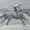 Secretariat working for the Wood Memorial.<br /> Photo by: Steve Haskin