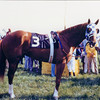 Secretariat This first one is after being saddled in the Preakness. I had photographed him looking straight ahead, and when he heard the click of the shutter, he turned his head and looked right at me...or through me. It was a memorable one-on-one moment with a legend.<br /> Photo by: Steve Haskin